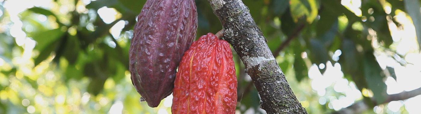 Cacao e Cioccolato Buono e Naturale