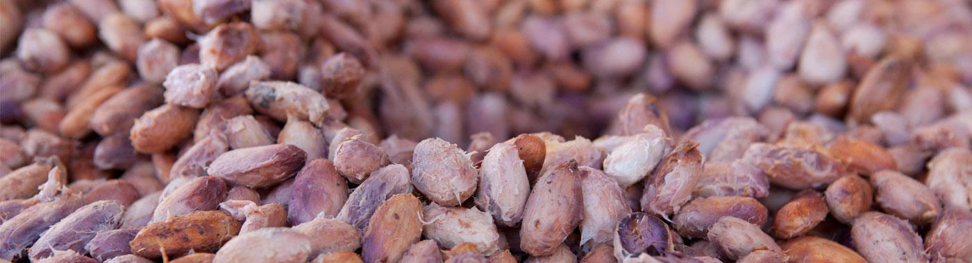Cacao e Cioccolato Sano e Semplice