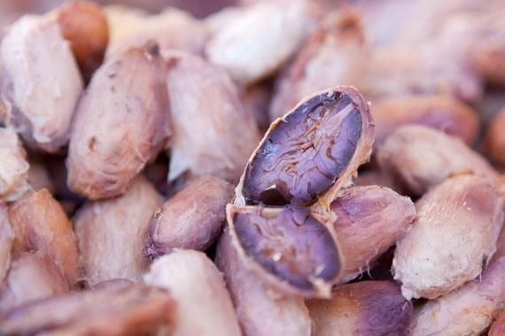 Cacao in fermentazione